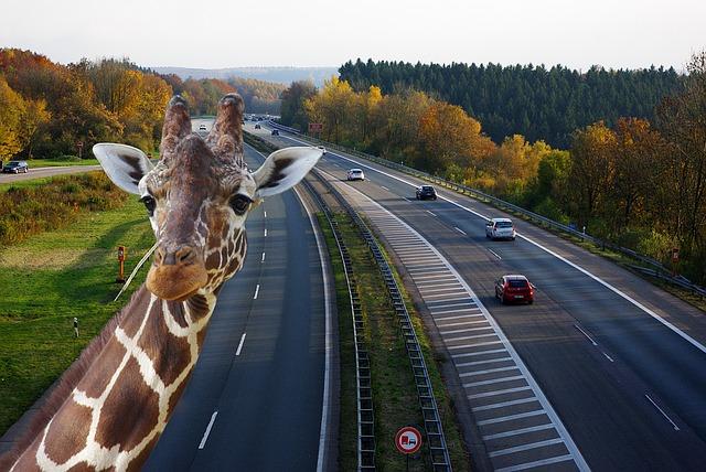 highway-1342010_640